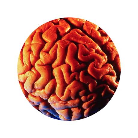 "Human brain 3.5"" Button"