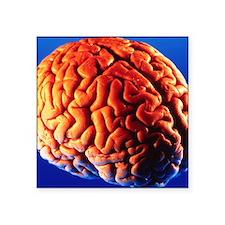 "Human brain Square Sticker 3"" x 3"""