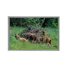 Alaska Brown Bear Cubs Rectangle Magnet