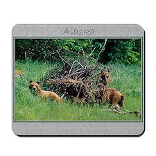 Alaska Brown Bear Cubs Mousepad