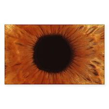 Human iris Decal
