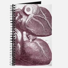 Human heart Journal