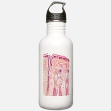 Human skin section, li Water Bottle