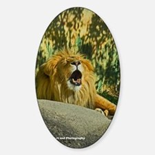 Tired Lion Decal