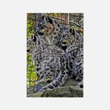 Snow Leopard Family Rectangle Magnet