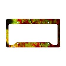 FallVineLeaf11x16 License Plate Holder