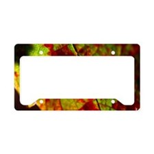 FallGrapeLeaf11x18 License Plate Holder