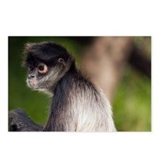 Spider Monkey in Belize Postcards (Package of 8)