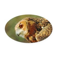 Eagle owl ready to take off Oval Car Magnet