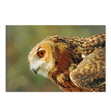 Eagle owl ready to take o Postcards (Package of 8)