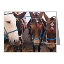 Horses, Fira, Santorini, Gre Note Cards (Pk of 20)