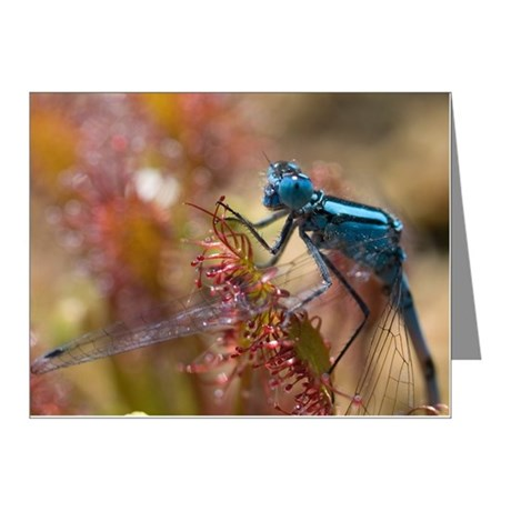 Common Blue Damselfly male s Note Cards (Pk of 20)