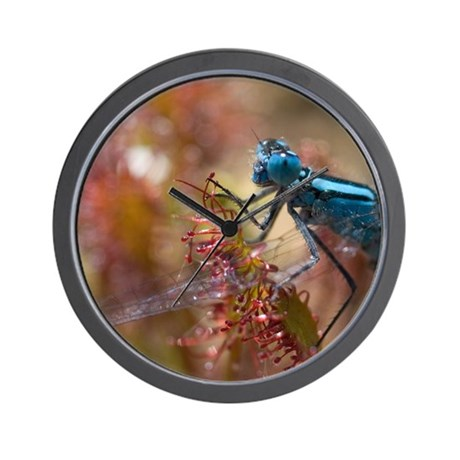 Common Blue Damselfly male stuck in a c Wall Clock