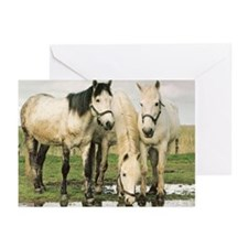 Camargue Horses Greeting Cards (Pk of 10)