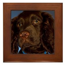 Chocolate Brown cocker spaniel puppy p Framed Tile