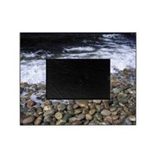 the shore. green point Picture Frame