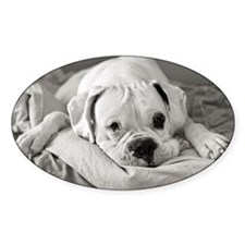 Dog lying on bed. Decal