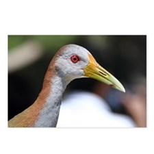 Grey necked wood rail wit Postcards (Package of 8)