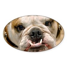 Portrait of a Bull Dog with an Unde Decal