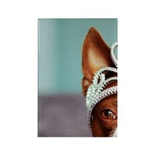 Red boston terrier wearing crown  Rectangle Magnet
