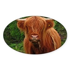 Profile of long haired highland cow Decal
