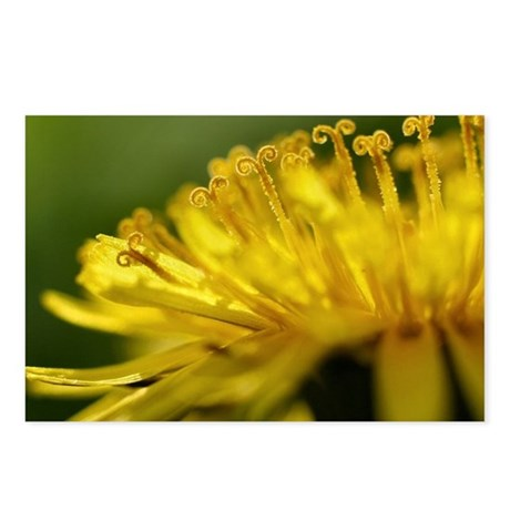 Macro image of the blosso Postcards (Package of 8)