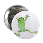 Tree Frog Photo Button