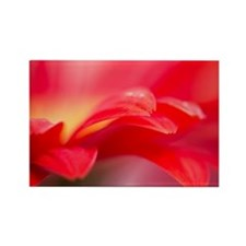 Close up of red flower. Rectangle Magnet