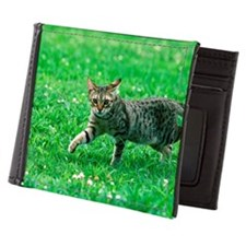 Ocicat Mens Wallet