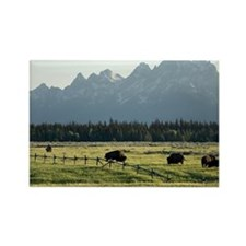 Bison grazing Rectangle Magnet