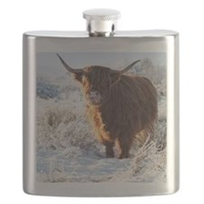 Hairy Highland cow licking is snow from his  Flask