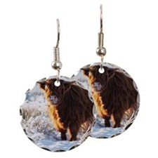 Hairy Highland cow licking is Earring