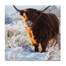 Hairy Highland cow licking is snow fr Tile Coaster