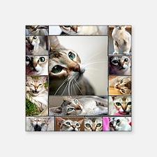 "Singapura Cats Square Sticker 3"" x 3"""