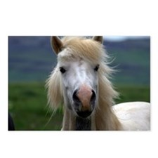 Icelandic horse Postcards (Package of 8)