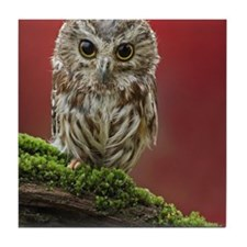 Saw Whet owl in rain with Dogwood bus Tile Coaster