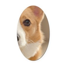 Cute Corgi Oval Car Magnet