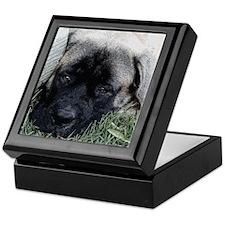 Mr Cinco Mastiff Ink Sketch Keepsake Box