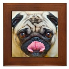 Pug with tongue out. Framed Tile