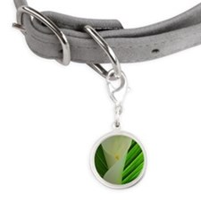 White calla lily with leaf Small Round Pet Tag