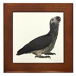 Baby African Gray Parrot Framed Tile