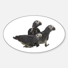 African Gray Parrot Babies Oval Decal