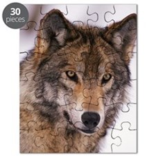 Head shot of gray wolf Puzzle