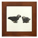 Baby African Gray Parrots Framed Tile