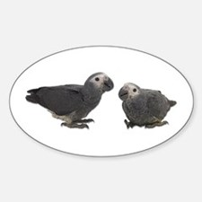 Baby African Gray Parrots Oval Decal