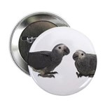 Baby African Gray Parrots Button