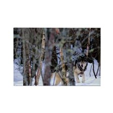 GREY WOLVES CANIS LUPUS IN FOREST Rectangle Magnet