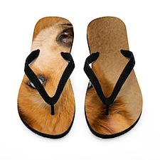 Portrait of puppy Flip Flops