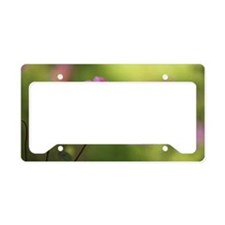 Pink flower License Plate Holder