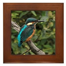 Kingfisher (Alcedo atthis) perching on Framed Tile